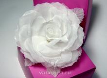 Роза белоснежная