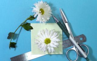 Выкройки для хризантемы
